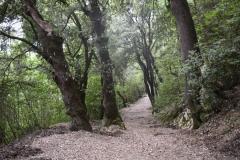 05 Sentiero verso l'Eremo